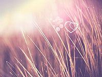 稻草里的浪漫爱心背景PPT模板
