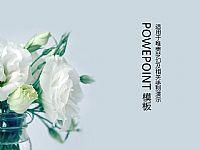 温馨浪漫的白玫瑰PPT模版