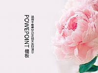 唯美盛开的牡丹花PPT模板