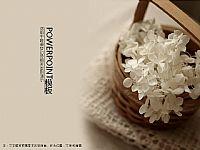 唯美的白色桃花花瓣PPT模板