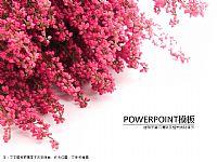 唯美时尚粉红花墙PPT模板