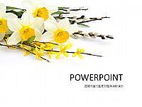 白色花枝花束精美PPT宝藏背景图片下载
