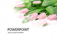 唯美粉色郁金香PPT背景模版下载