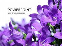 紫色浪漫花卉PPT模版下载