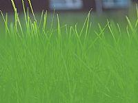 绿色ppt背景图片、网页绿色背景素材