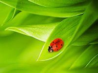 水滴、绿色树叶、瓢虫PPT背景图片素材