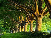 树林风景ppt背景图片