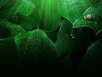 绿叶蜗牛幻灯片背景图片