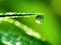 绿叶晶莹水滴ppt背景图片