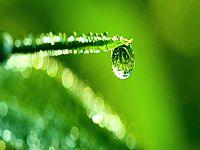晶莹绿叶水滴ppt背景图片