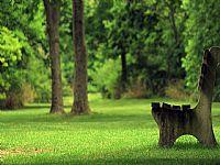 绿色公园长椅ppt背景图片